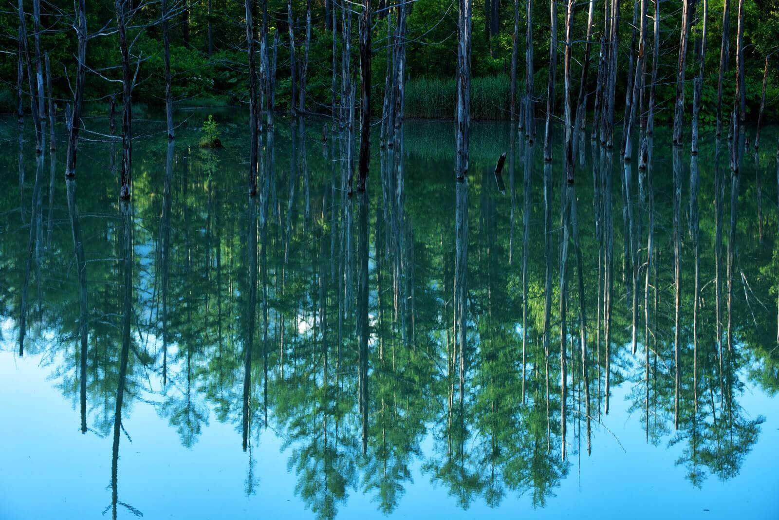 滋賀県の湖
