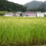 【宮崎県の復縁屋ベスト5】復縁工作事例を見ながらチェックしよう